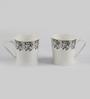 Bp Bharat Peter Microwave Series Bone China 160 ML Coffee Mug - Set of 12