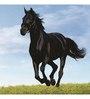 Wall Decor Canvas & Wood 24 x 24 Inch Horse Framed Digital Art Print