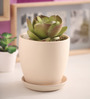 Gaia Beige Glazed Ceramic 7 x 7.5 Inch Table Top Planter with Plate
