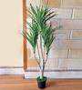 Ginni Bloom Green Polyester Yucca Bush