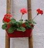 Green Gardenia Red Railing Basket