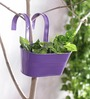 Green Girgit Purple Oval Railing Planter