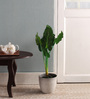 Pollination Green Polyester Monstera Artificial Plant In Wooden Pot