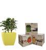 Yuccabe Italia Combo for 3 Stella (Yellow Self Watering planter)