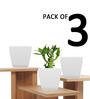 Yuccabe Italia Pack of 3 Stella (White planters)
