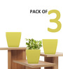 Yuccabe Italia Pack Of 3 Stella (Yellow planter)